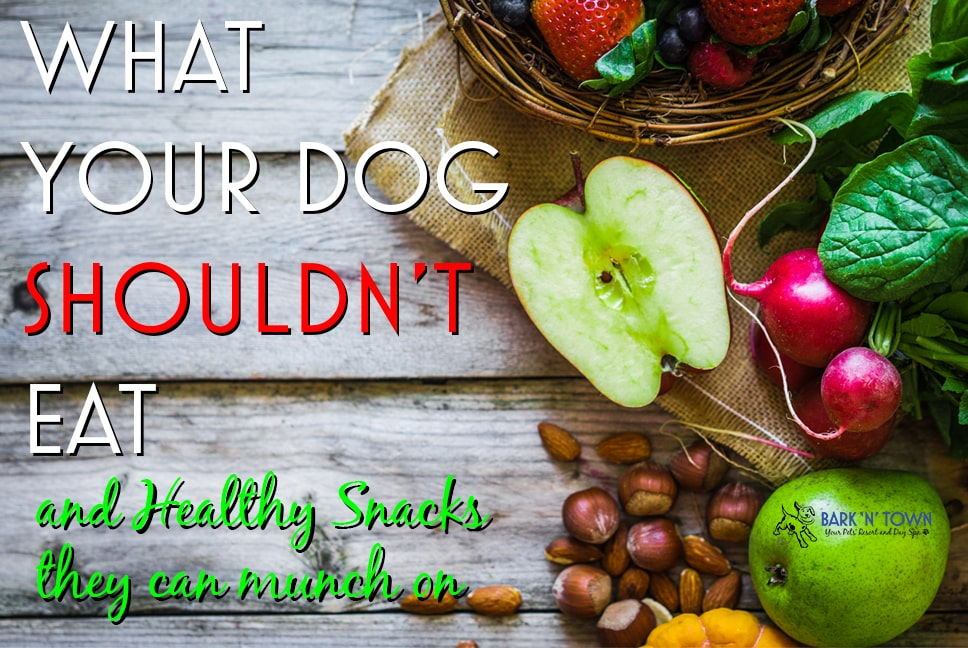 What Your Dog SHOULDN'T Eat and Healthy Snacks They Can Munch On