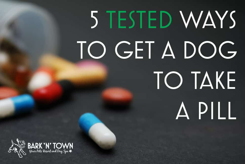 5 Tested Ways to get a Dog to Take a Pill