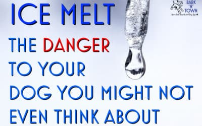 Ice Melt: The Danger to Your Dog You Might Not Even Think About