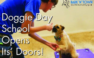 Doggie Day School Opens Its' Doors!