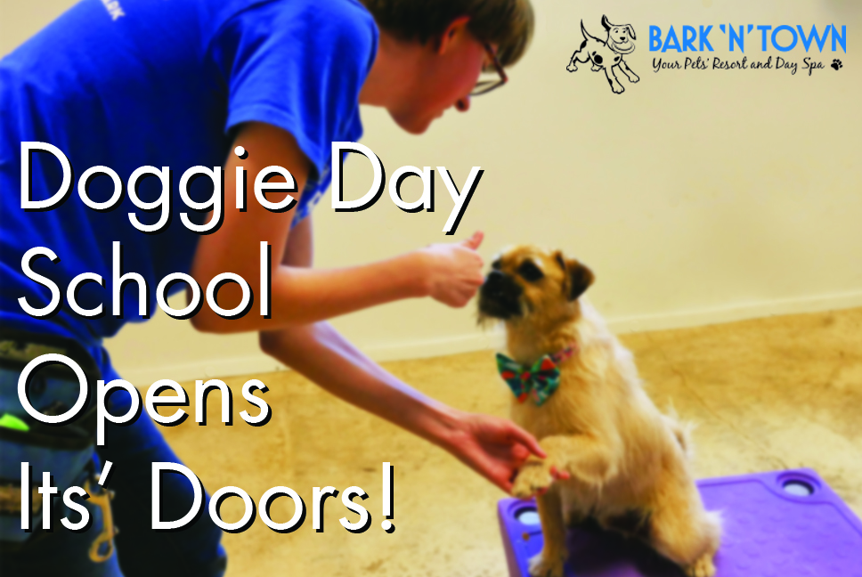 Doggie Day School Opens Its' Doors!