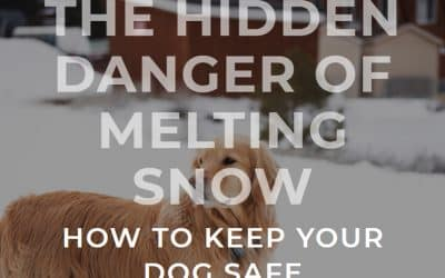 The Hidden Danger of Melting Snow: How to Keep Your Dog Safe