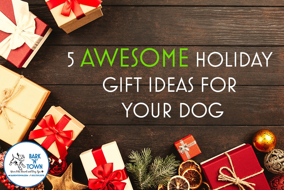 5 AWESOME Holiday Gift Ideas for Your Dog
