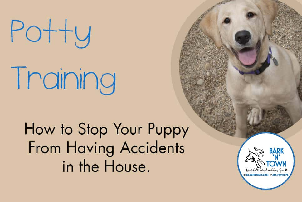 Potty Training: How to Stop Your Puppy From Having Accidents in the House