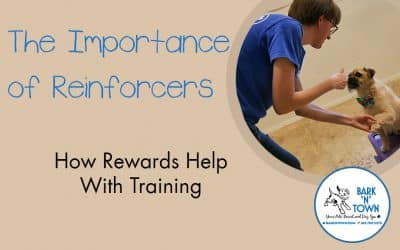 The Importance of Reinforcers: How Rewards Help With Training