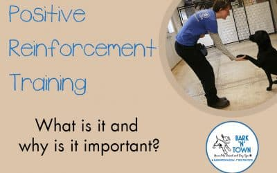 Positive Reinforcement Training: What is it?