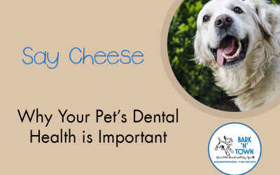 Say Cheese: Why Your Pet's Dental Health is Important
