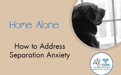 Home Alone: How to Address Separation Anxiety