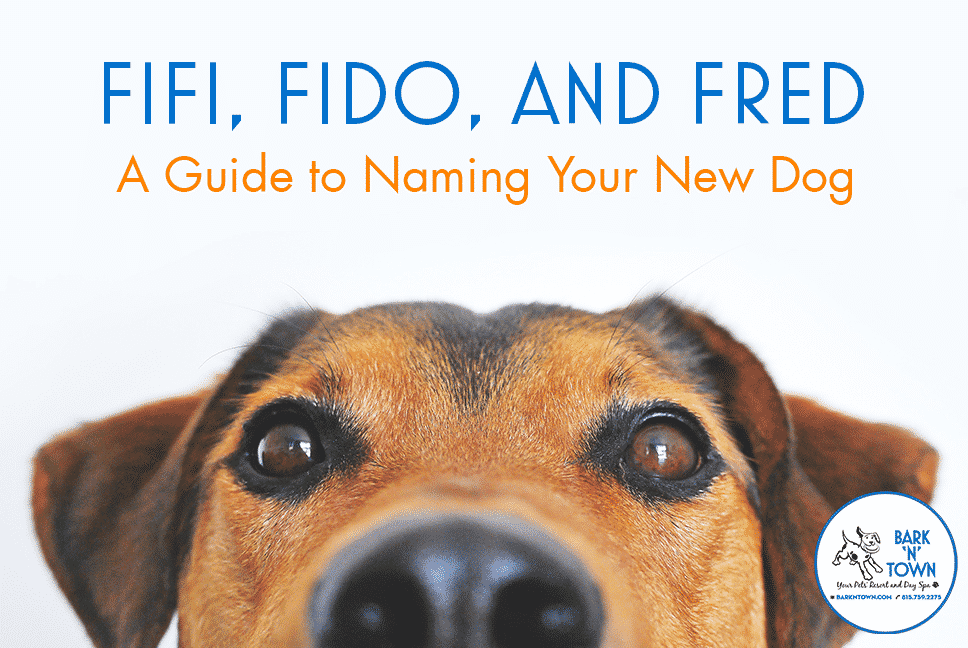 Fifi, Fido, and Fred: A Guide to Naming Your New Dog