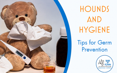 Hounds and Hygiene: Tips for Germ Prevention